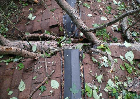 tree damage, storm damage